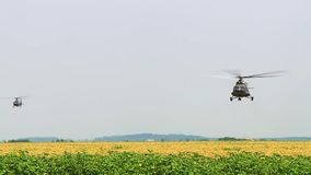 Military helicopters fly over the field of sunflowers, hostilities, aircraft stock video footage