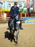 Military horses Royalty Free Stock Image