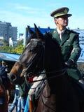 Military horses Royalty Free Stock Photo