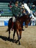 Military horses Royalty Free Stock Photos