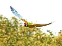 Military Macaw (Ara militaris) Royalty Free Stock Photo