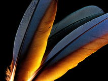 Military Macaw feathers Stock Photos