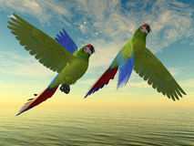 Military Macaw Royalty Free Stock Photography
