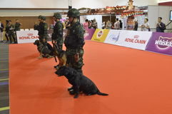 Military police dog training  in Thailand Royalty Free Stock Images