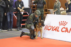Military police dog training  in Thailand Stock Photo