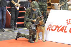 Military police dog training  in Thailand Royalty Free Stock Photography