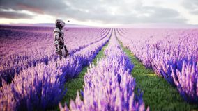 Military robot, cyborg with gun in lavender field. concept of the future. 3d rendering. Military robot, cyborg with gun in lavender field. concept of the future Royalty Free Stock Image
