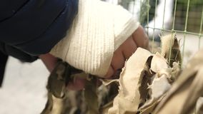 Soldier Weaves Army Camouflage Net. Military screening netting at army camp. Male soldier with wounded hand weaves army camouflage net stock video