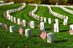 Military tombstones with American flags. Head Stones of veterans arranged in a curve with American flags posted Stock Image