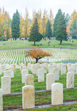 Military tombstones in the grave yard. Royalty Free Stock Photo
