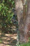 Military training combat. Florest action Stock Image