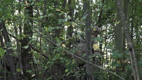 Military weapons are in the woods. The soldier is moving in the forest. Armed man. stock video