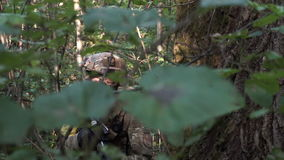 Military weapons are in the woods. The soldier is moving in the forest. Armed man. An armed soldier walks through the woods. Adult military uniforms in the army stock video footage