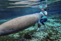 Military Wife Manatee Experience Royalty Free Stock Image