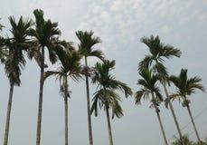 miljö av trädet med öppen himmel i by royaltyfri bild