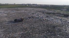 Miljö- förorening, den flyg- sikten på folk arbetar på den stora avskrädehögen, och många fiskmåsar flyger över avfallförrådsplat stock video
