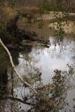 Miljö- katastrofer, stupade döda träd nära skogfloden i hösten arkivfoton