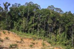 Miljö- problem för skogsavverkning Royaltyfria Foton