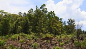 Miljö- problem för skogsavverkning arkivfoto