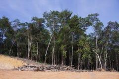 Miljö- problem för skogsavverkning Royaltyfri Bild