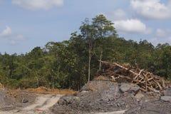 Miljö- problem för skogsavverkning Royaltyfria Bilder