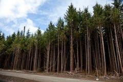 Miljö- skada för skog arkivbilder