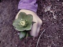 miljökonst Royaltyfria Bilder