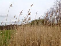 Miljön i Belgien på slutet av vårtid Royaltyfria Foton