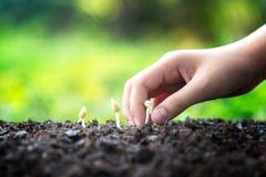Miljönatur Den lilla asiatiska flickan som rymmer unga växter i naturen, parkerar och ser etapper av tillväxt Arkivbild