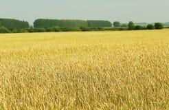 Miljötekniker i jordbruk - naturprodukter Arkivfoto