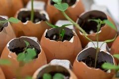 Miljövänliga växtkrukor Royaltyfri Bild