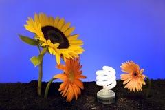 miljövänskapsmatch Royaltyfria Bilder