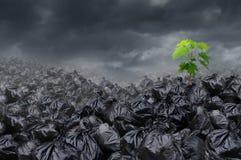 Miljö- hopp Fotografering för Bildbyråer