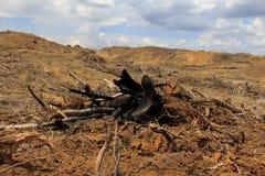 Miljö- problem för skogsavverkning Arkivbild