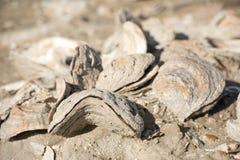 Miljard åriga skal på stranden Royaltyfri Foto