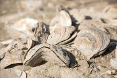 Miljard éénjarigenshells op het strand royalty-vrije stock foto