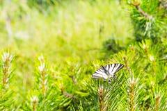 Miljöbakgrund med fjärilen och gröna växter Arkivfoto