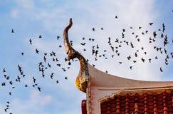 Miljon slagträn på Thailand arkivbilder