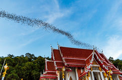 Miljon slagträn på Thailand royaltyfri foto