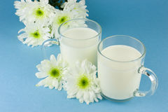 Milk royalty free stock photo
