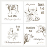 Milk And Cow Stock Photography