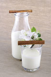 Milk in a bottle. With cinnamon and apple flower Royalty Free Stock Images