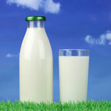 Milk in a bottle and glass on green meadow Royalty Free Stock Image