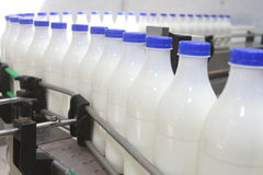 Milk bottles at conveyor. White milk bottles with blue cover at conveyor Royalty Free Stock Photo