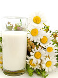 Milk and camomile Royalty Free Stock Photography