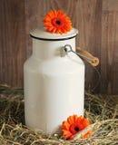 Milk Can, Gerbera, Flowers, White Royalty Free Stock Image