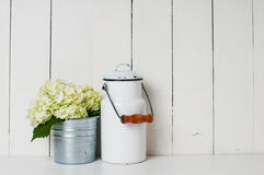 Milk can and white hydrangea Stock Images