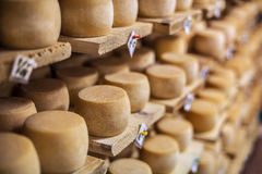 Milk cheese on a shelves Royalty Free Stock Images