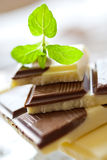 Milk chocolate with fresh mint Stock Image