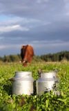 Milk containers and cow eating clovers Royalty Free Stock Photos